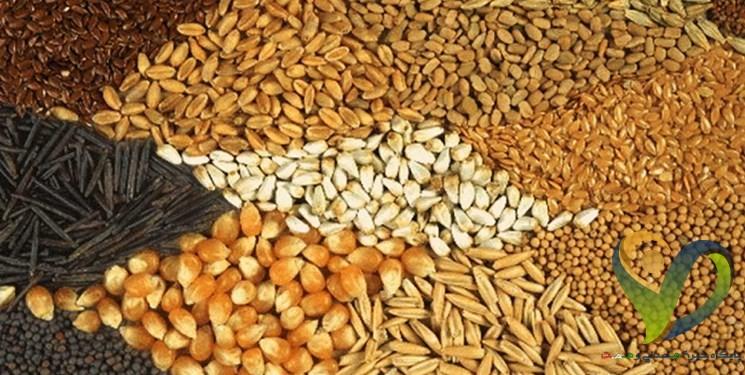 فنر قیمت خوراک دام پرید/رشد بی سابقه قیمت ذرت و گندم در بازارهای جهانی