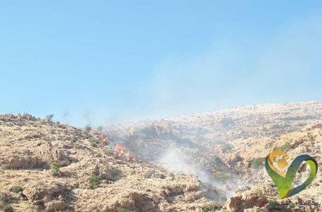 آتش سوزی در ارتفاعات باشت