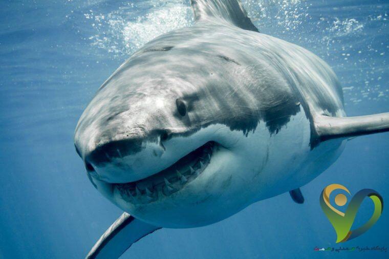 این حیوانات به اندازهی تصورات ما خطرناک نیستند