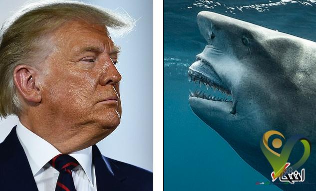 شباهت جالب نیم رخ دونالد ترامپ و یک کوسه پربازدید شد+تصاویر